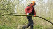 Natuurpunt gaat kroonhout opkuisen in Duivenbos