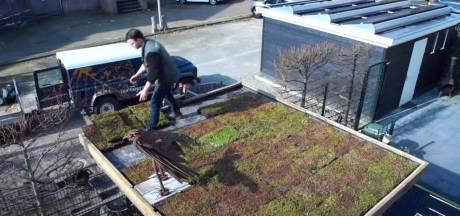 Provincie zet servicepunt op om inwoners en bedrijven aan meer groene daken te helpen