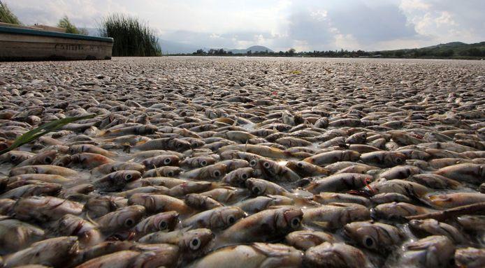 Foto genomen in West-Mexico. Een afvalzuiveringsstation zou door problemen de zuurstof in het water hebben verminderd, waardoor vissen massaal stierven.