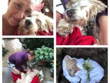 'Bijzondere' hond Leos is dood: 'Ik heb voor mezelf een plukje haar geknipt'