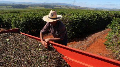 Coronavirus brengt koffieoogst in Brazilië in gevaar
