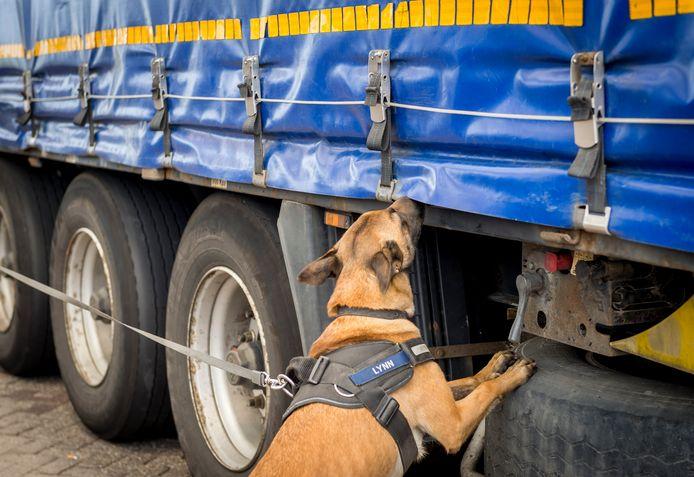 Een speurhond besnuffelt een vrachtwagen in Hoek van Holland.