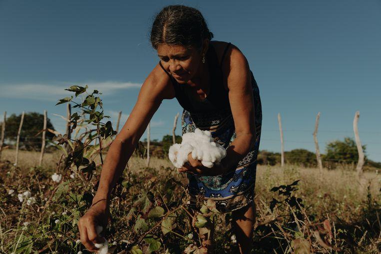 Helena en haar man runnen een boerderij in Tauá. Al hun katoen gaat naar Veja, dat gemiddeld 3,04 euro per kilo betaalt. Het wereldwijd gemiddelde is 1,73 euro. Beeld Charlotte Lapalus