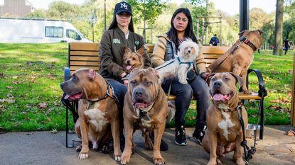 Weer hond aangevallen door bully's