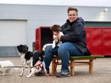 Coronapuppies bezorgen hondenscholen handen vol werk: 'Het lijkt wel alsof iedereen een pup wil hebben'