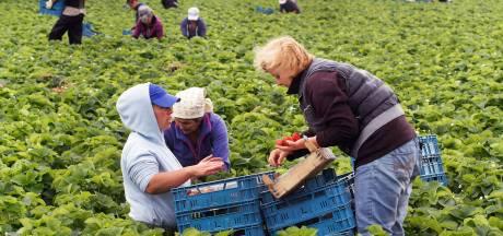 Niet twee, maar één ondernemer is niet op tijd met woonplan voor arbeidsmigranten in Steenbergen
