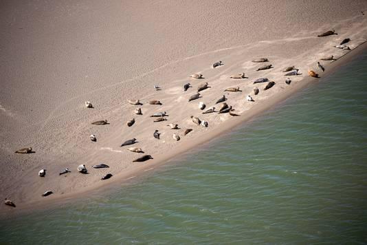 Zeehonden langs de kustlijn.