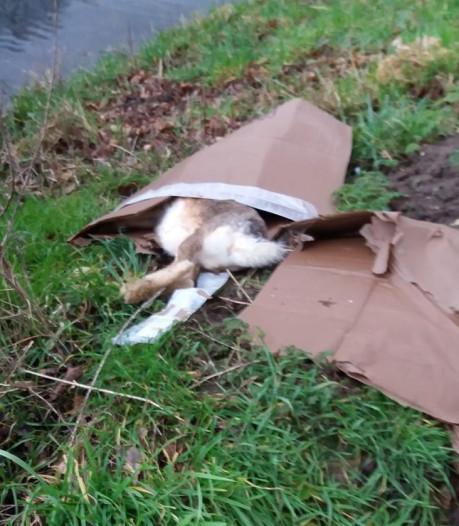 Lugubere vondst: dode, bebloede haas langs sloot in Hengelo