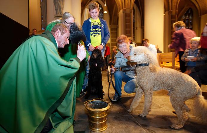 Pastoor van Bronswijk zegende de dieren tijdens een soort open inloop in de Basiliek in Oosterhout.