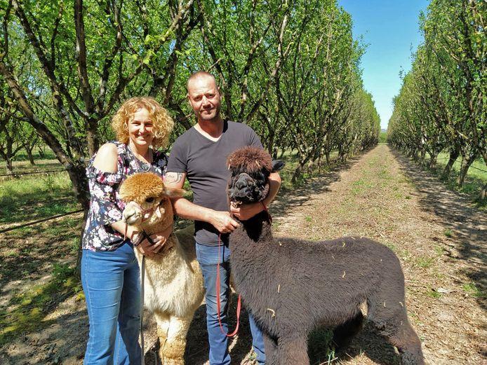 Brigitte en Don met twee van de alpaca's.