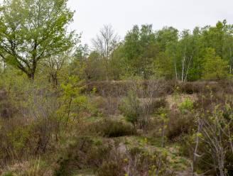 """Ook PVDA verzet zich tegen plan Natuurpunt om 28 hectare bos te kappen in De Maten: """"Brengen punt op gemeenteraad"""""""