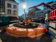 Straatbeeld: geen klein boompje, maar een negen meter hoge boom op de Markt