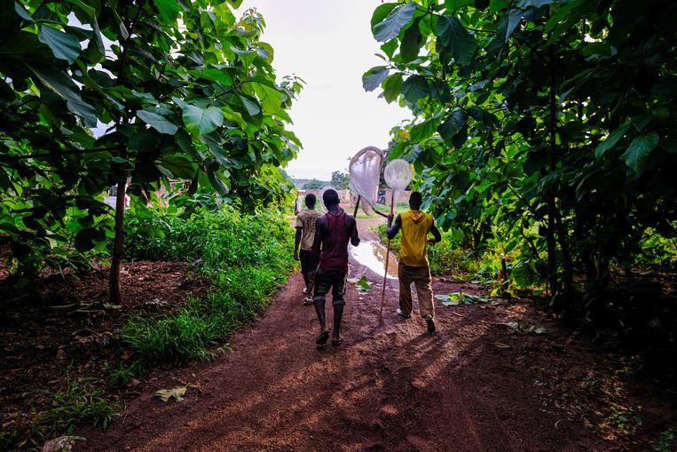 Een groepje jonge mannen trekt Bana in om muggen te vangen. Beeld Joost Bastmeijer