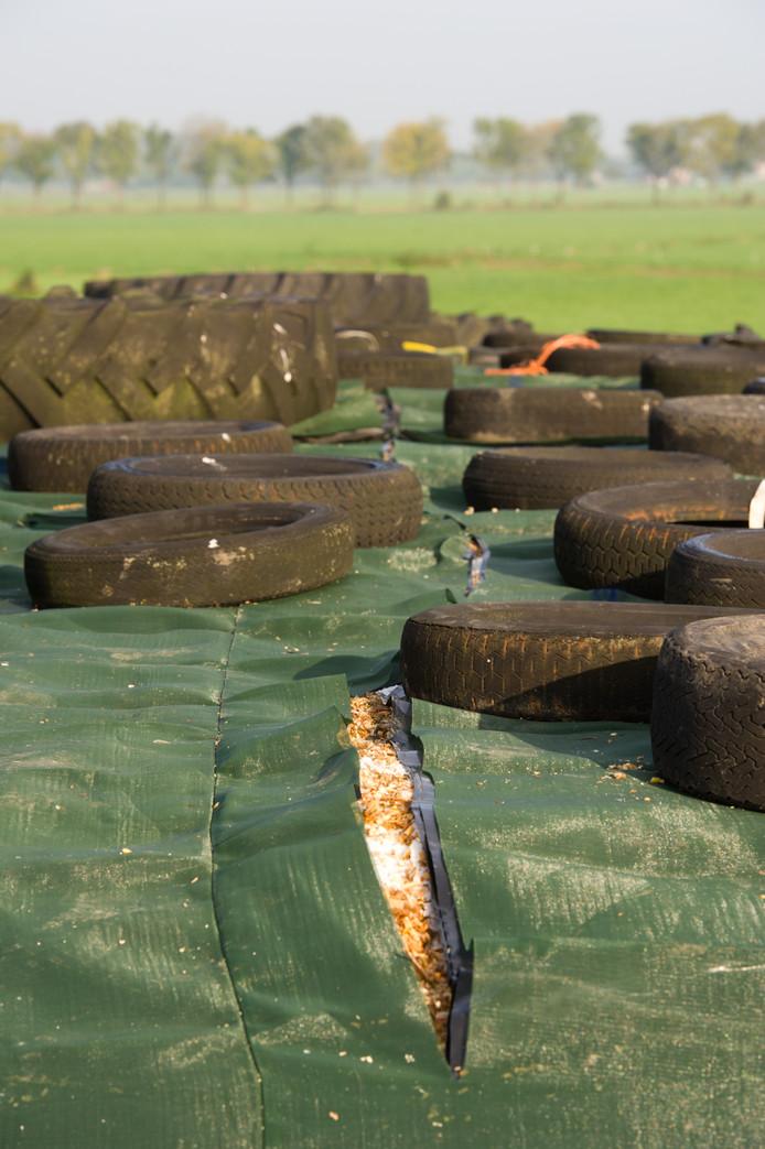Agriterreur in 2017 in Wamel: kapotgesneden dekzeilen van kuilvoer.