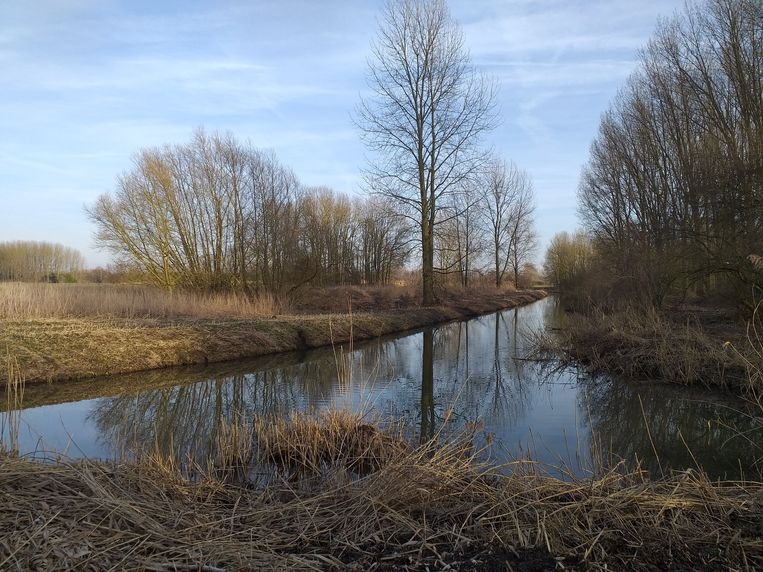 Een natuurgebied langs de Oude Schelde, een zijarm van de Schelde, in Bornem. Er zit te veel mest in de Vlaamse rivieren en het gaat van kwaad naar erger. Beeld Didier Verbaere