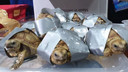 Bij een aantal dieren waren de bek en poten afgeplakt met plakband.