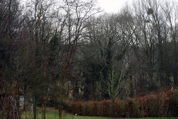 De oppervlakte aan bos blijft groeien in Lubbeek.