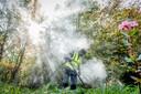 Ook met de thermische lans is de strijd tegen de Japanse duizendknoop een kwestie van heel lange adem.