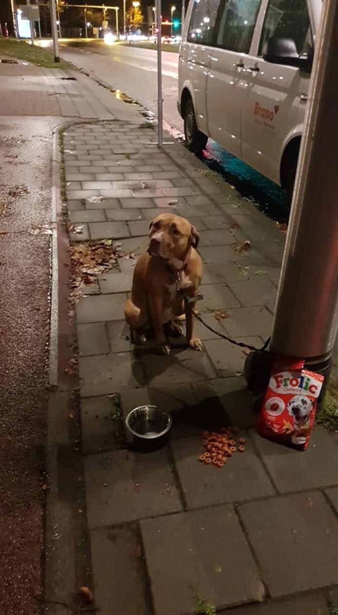 De vastgebonden hond is teruggekeerd bij zijn baasje.