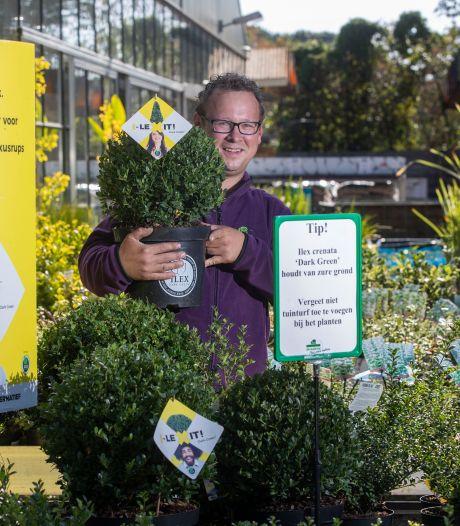 Buxusmot lust ook andere planten dan de buxus