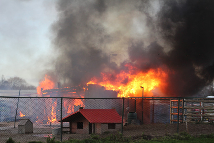 Bij een grote uitslaande brand in een hondenopvang in Zuidoostbeemster zijn meerdere dieren omgekomen.