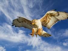 Hardloper aangevallen door roofvogel: 'De volgende keer neem ik toch een andere route'