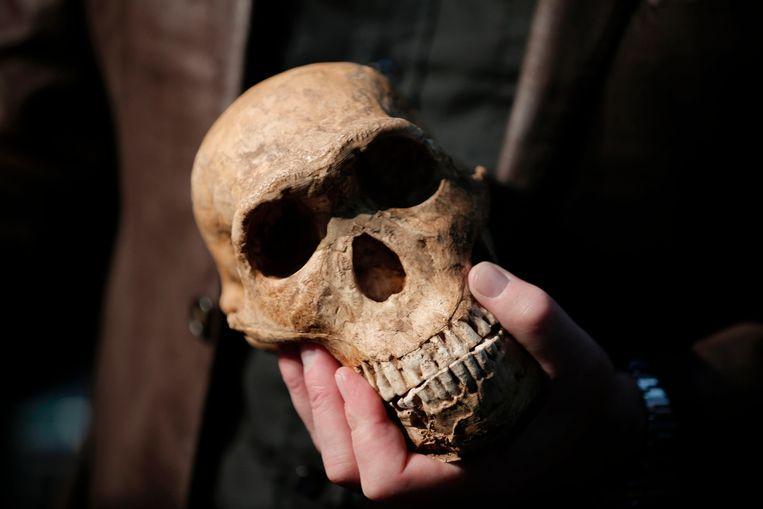 Homo Naledi was ongeveer 300.000 jaar geleden nog actief Beeld AFP