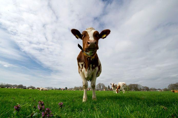 de Vereniging Verontruste Burgers van Voorne (VVBV) vreest voor de gezondheid van mens en dier.