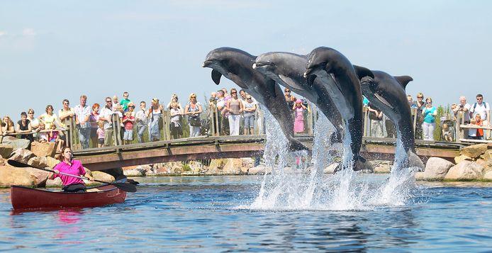 Volgens dierenclubs Sea Shepherd en House of Animals lost export van een aantal dieren niets op: 'De ruimte die overblijft, is alsnog veel te klein.'