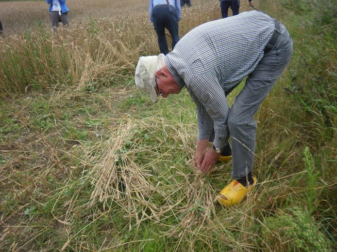 Ad Vorstenbosch is bezig met het binden van het 'rogge'.