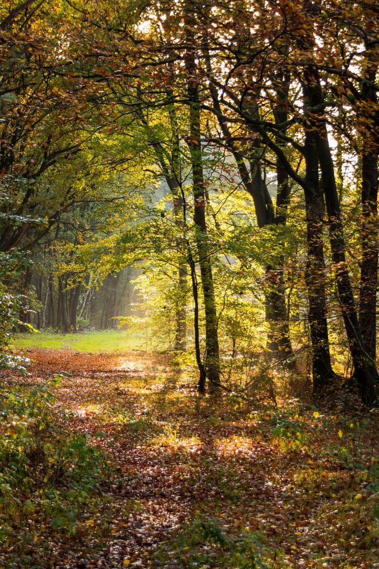 De omgeving van gevangenisdorp Veenhuizen leent zich goed voor lange boswandelingen. Beeld Sander Groen