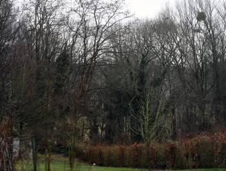 """Lubbeek wil meer bos creëren: """"We gaan voor titel van bebossingskampioen van Vlaanderen"""""""