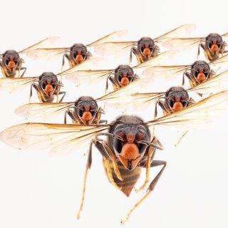Aglaia Bouma overwon haar angst voor insecten: 'Als ik er nu ergens een zie, ren ik er meteen op af'