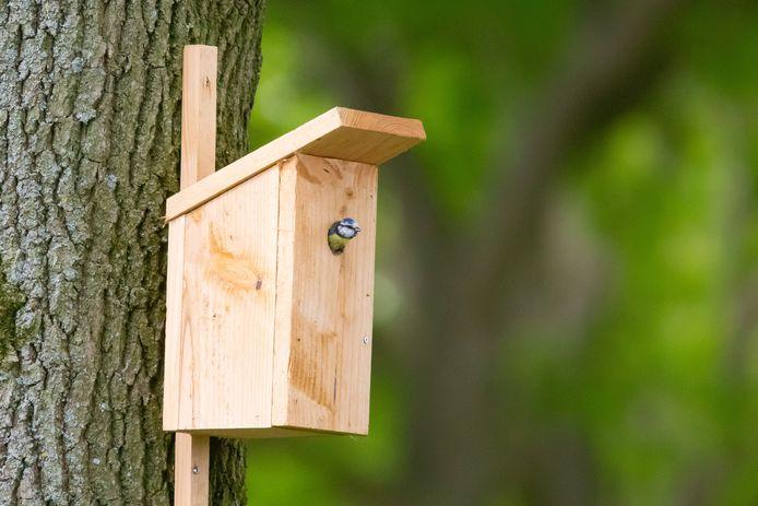 Een pimpelmees in een nestkastje (elders). Foto ter illustratie.