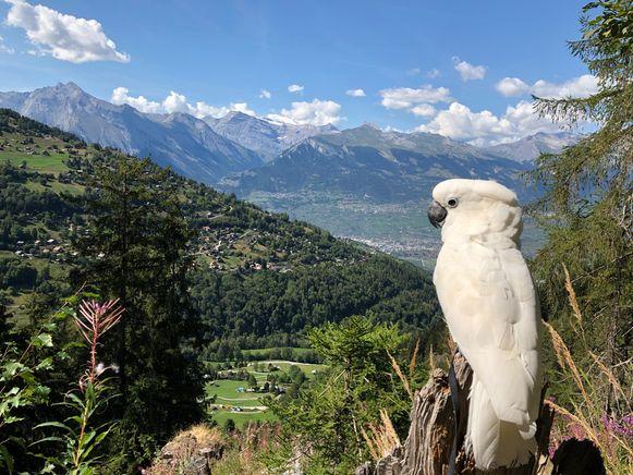 Een ideale prentbriefkaart en Instagram-story: Marni in de bergen.