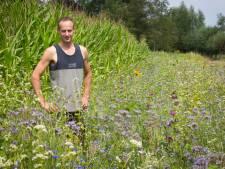 Buitengebied van Putten verandert in bloemenzee