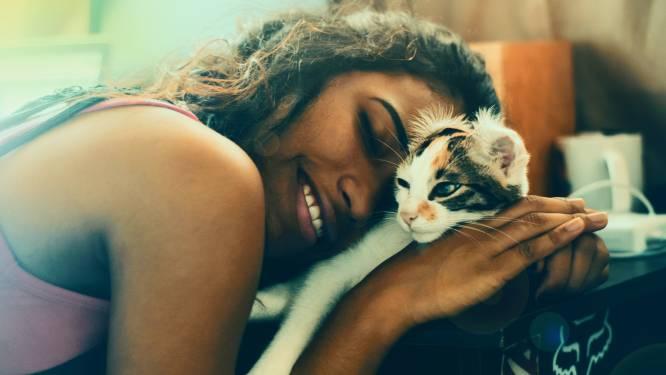 Aandoenlijk: volgens nieuwe studie zien kittens hun baasje als ouders