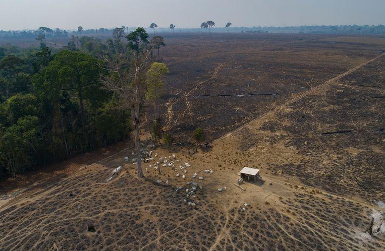 Een voor de landbouw ontbost gebied in het Braziliaanse regenwoud. Beeld AP