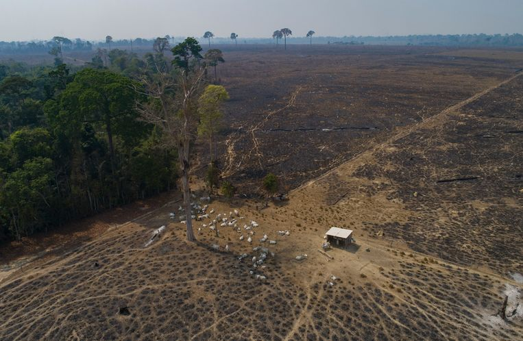De Amazone, 23 augustus 2020.  Beeld AP