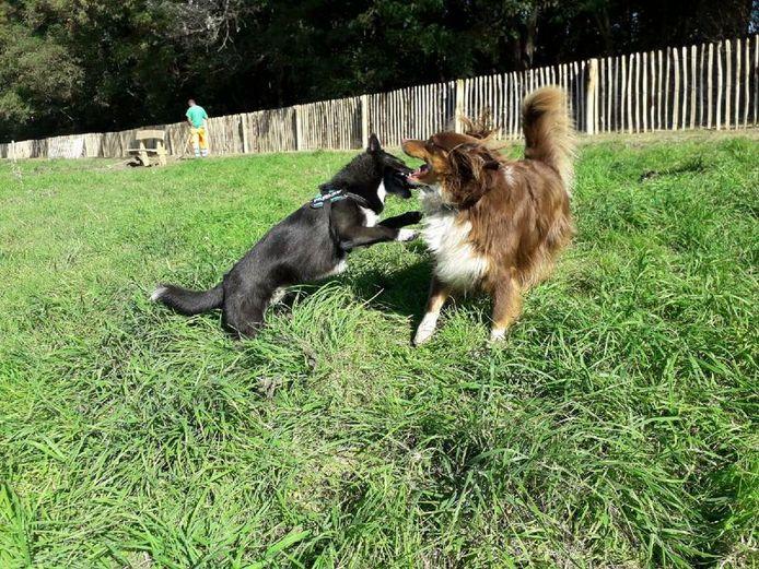 De gemeente Zelzate wil mobiele borden inzetten in de strijd tegen hondenpoep en loslopende honden op het openbaar domein.