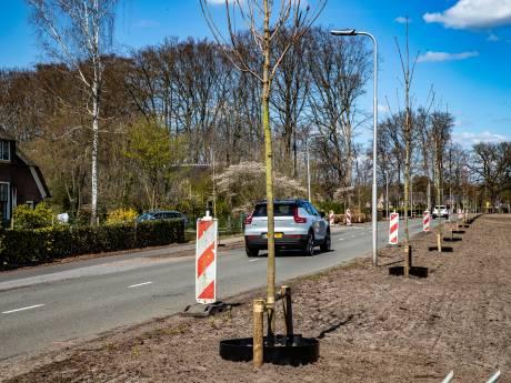 Deventer wil minder snel bomen kappen, maar kritiek blijft: 'Deze aantallen zijn nog te hoog'