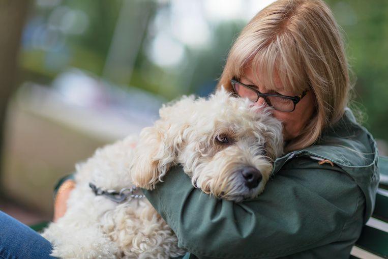 Baasje vindt haar hond zeven jaar later en 1700 kilometer verderop terug Beeld Getty Images/iStockphoto