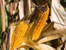 Drugsafval komt via mest in mais