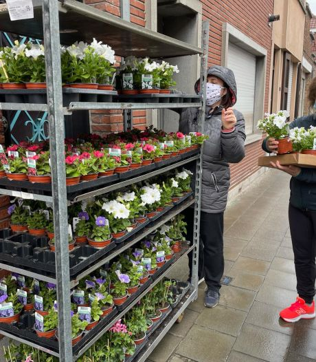 Record: 108.000 bloemen verhuizen vandaag van de groendienst naar de Brugse vensterbanken