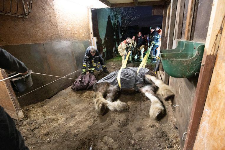 Het 23-jarige paard geraakte niet meer zelfstandig recht en moest geholpen worden.