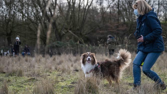 Hondenlosloopweide in Herent opent in 2022