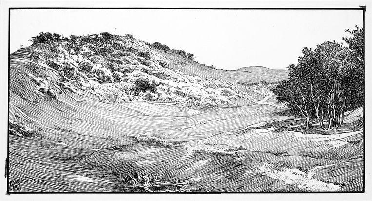 Bomen en struiken in de duinen. Beeld L.W.R. Wenckebach