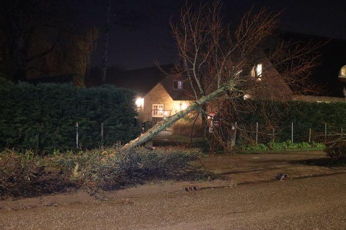De achtervolging eindigde tegen een boom aan de Polstraat in Wijk en Aalburg.