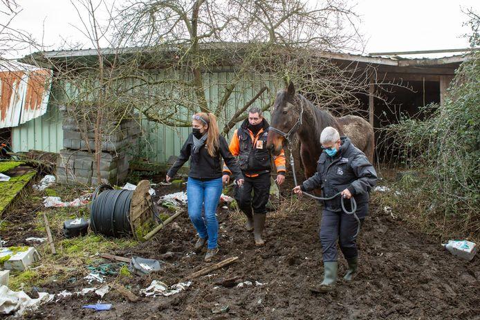 Les trois chevaux ont été saisis et sont à présent choyés dans les sanctuaires où ils ont été recueillis.