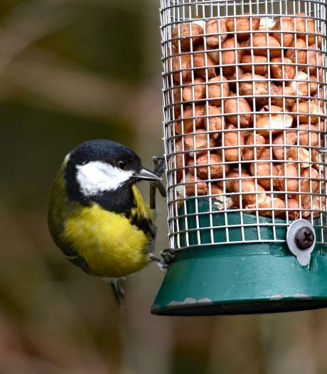 Tuinvogeltelling op komst: zo lok je ook de schuwe vogels